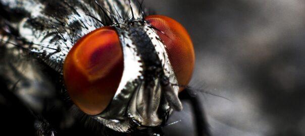 jak zwalczać muchy